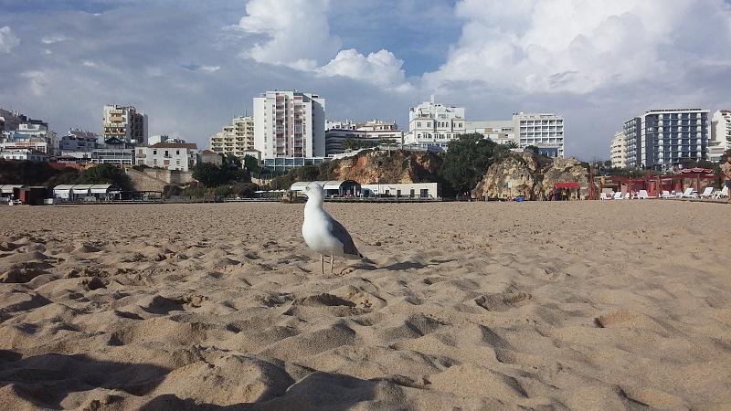 Mewa naplaży Praia da Rocha.