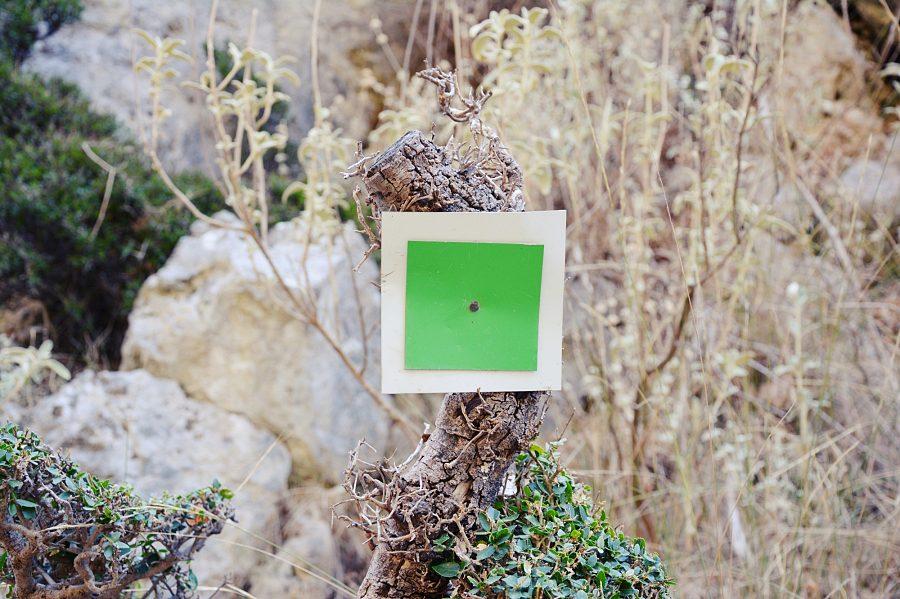 Zielony kwadrat wyznaczający szlak wwąwozie Sirikari.