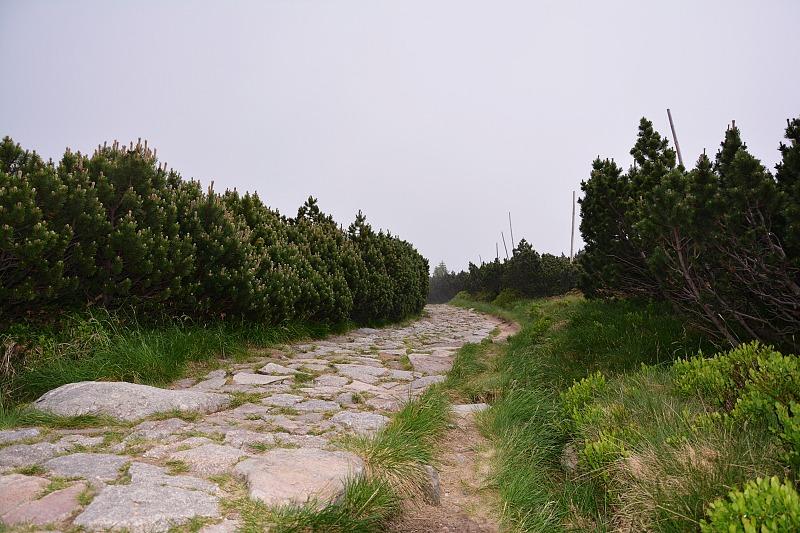 Połacie kosodrzewiny przy szlaku nakrawędź Kotła Małego Stawu.
