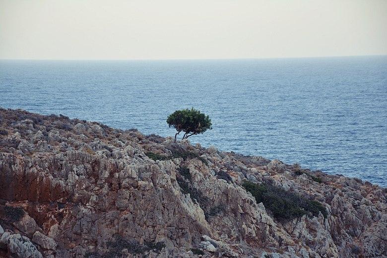 samotne drzewo nadseitan limania