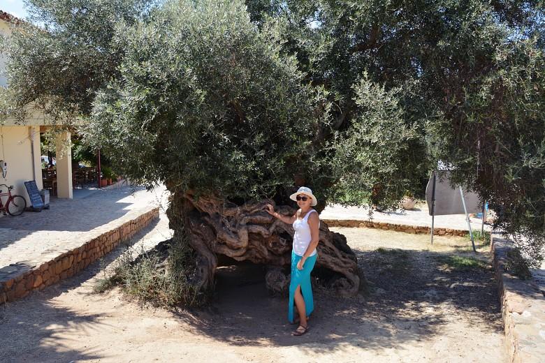 bezkresnepodroze podnajstarsza oliwka vouves