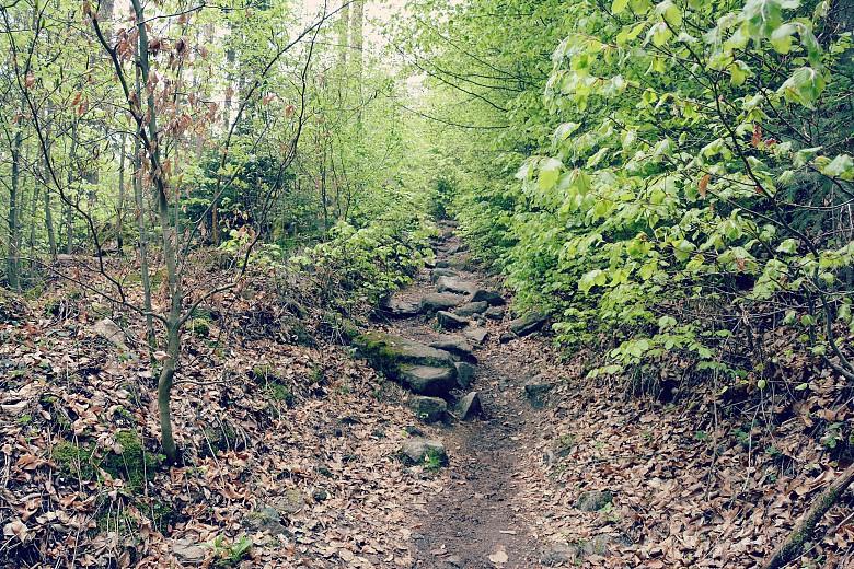 Czarny, leśny ikamienisty szlak naKrzyżną Górę.