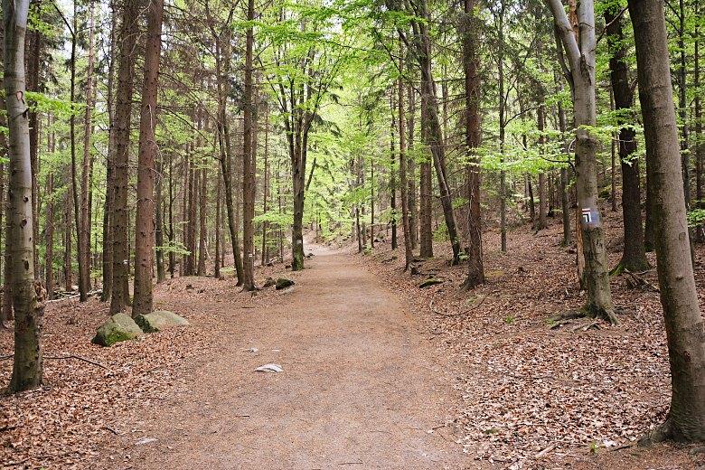Leśny czerwony szlak doSokolika Dużego.